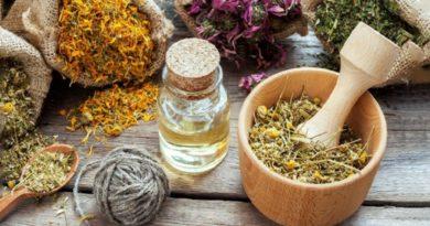 Las plantas medicinales, un recurso desaprovechado por la medicina convencional